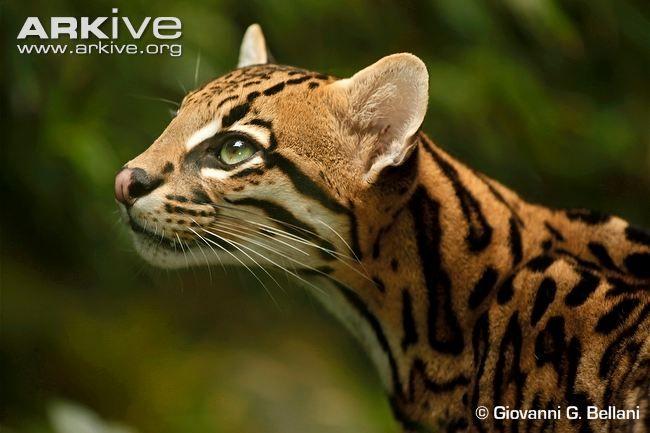 conservation biology journal