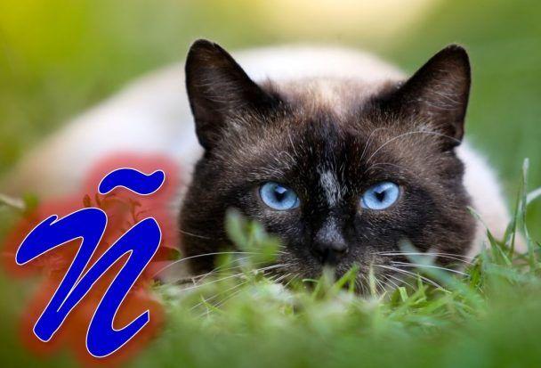 Nombres Para Gatos Con La Letra ñ Nombres Para Gatas Gatos Gatos Kawaii