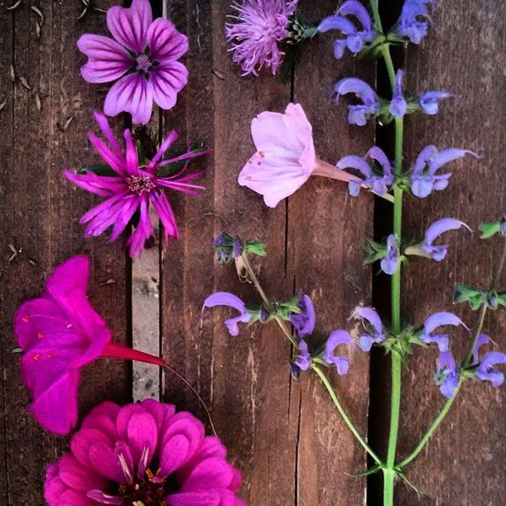 Flower Power #flowers #purple #colours #nature #naturelove