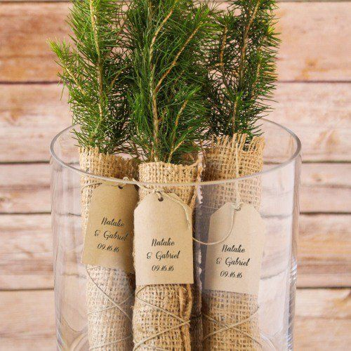 Evergreen Tree Seedling Favor With Personalized Tag.......