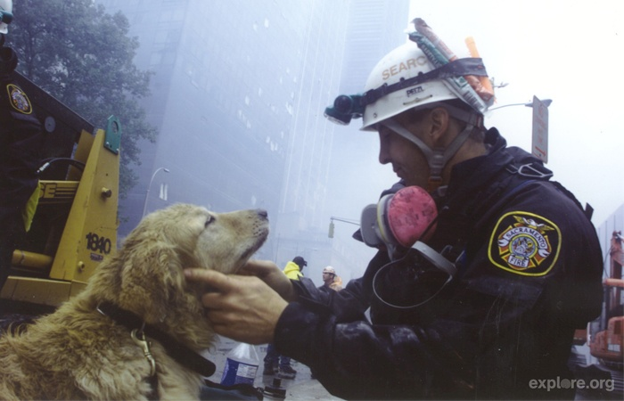 Debra's dog Abby was the last remaining SDF search and rescue dog who served at Ground Zero.Rescue Dogs, Dogs Blessed, Heroes Dogs, Ground Zero, Service Dogs, Shelters Dogs, Search Dogs, 911, Fire Department