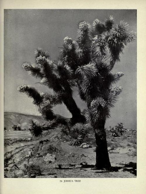 Desert essence.