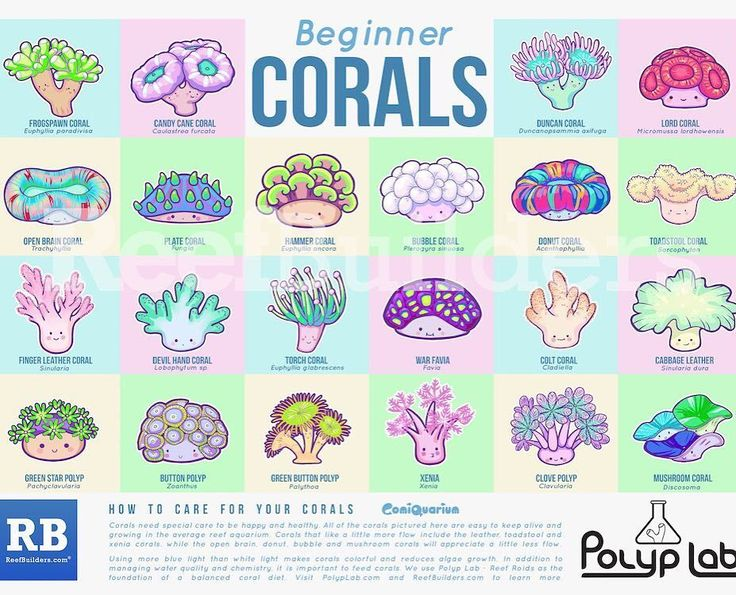 """At Macna? Get our beginners coral poster from the @reefbuilders booth!! #polyplab #macna #macna2016…"""