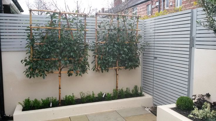 Pleached Photinia Red Robin from a contemporary courtyard design by Sue Davis of www.outside-rooms.co.uk
