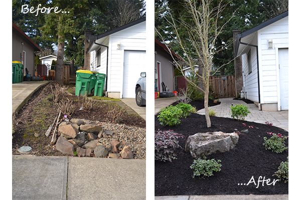 Before And After Of The Side Yard In Tigard Drought