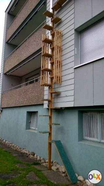 Cat Ladder I want to build. | Outdoor cats, Cat furniture ...