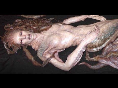 Real Mermaid Found Alive Video | মৎস্য কন্যা