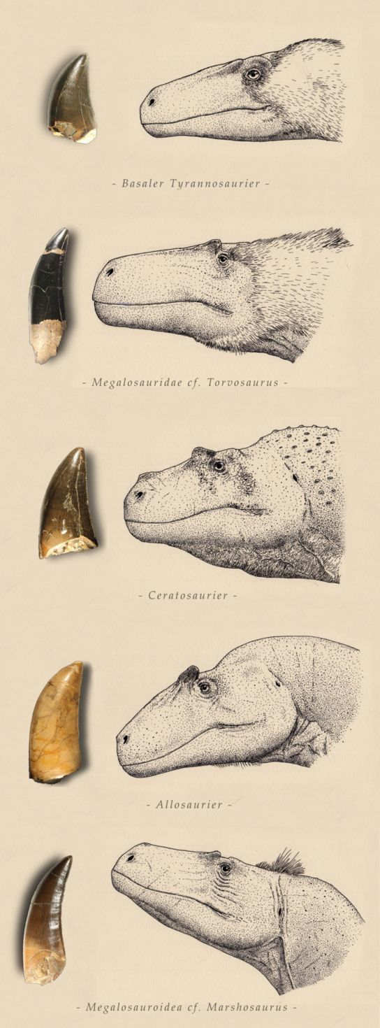The theropods of Northern Germany by Joschua Knüppe