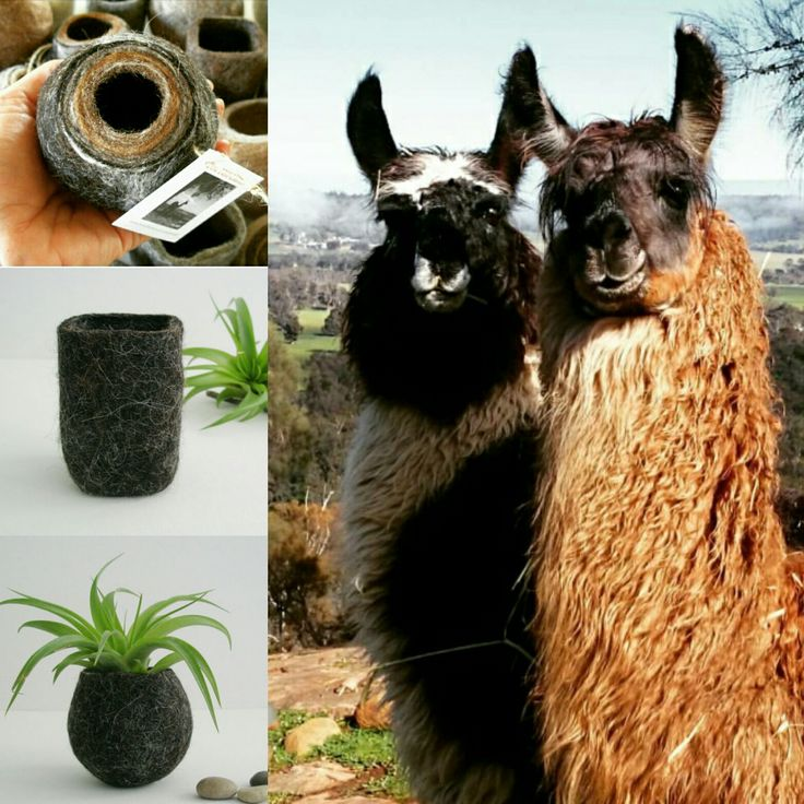 Shadow is the black llama in the image. I often combine the fibre from different animals in the one piece. Some animals have a range of colours within their fibre and choosing which sections to use makes the process more interesting and the product quite variable. Each piece is unique in it's own way and trying to replicate items with multiple colours is tricky.
