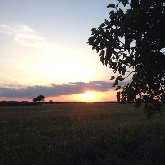 Sappiate amare l'ambiente.. sappiatelo custodire e guardatelo sempre da innamorati.. 5 Giugno - Giornata Mondiale dell'Ambiente.   #land #terra #matine #lematine #viglione #santeramo #santeramoincolle #bari #puglia #apulia #vino #wines #fico #albero #three #tree #worldenvironmentday #wed2014 #giornatamondialeambiente #ambiente #giugno #june #5june #5giugno #rio #sunset #tramonto #sun #sole