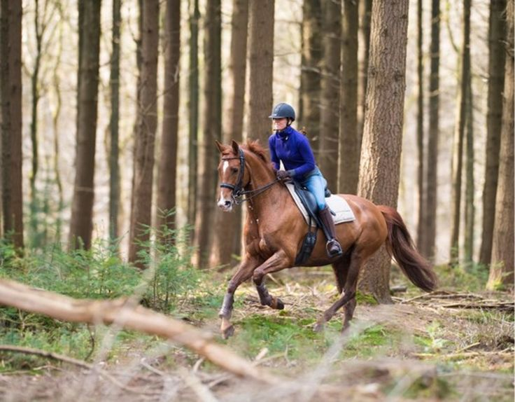 how to build muscle on a horse fast