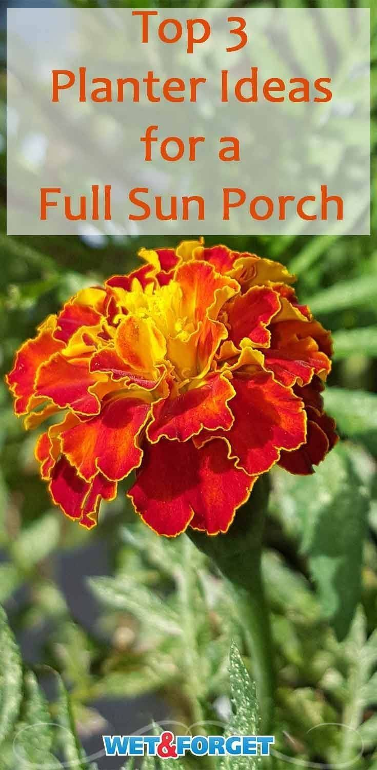 3 Trusting Cool Tips Whimsical Garden Ideas Window Garden Ideas Vegetable Backyard Whimsical Garden Ideas Na Front Porch Plants Full Sun Planters Porch Plants
