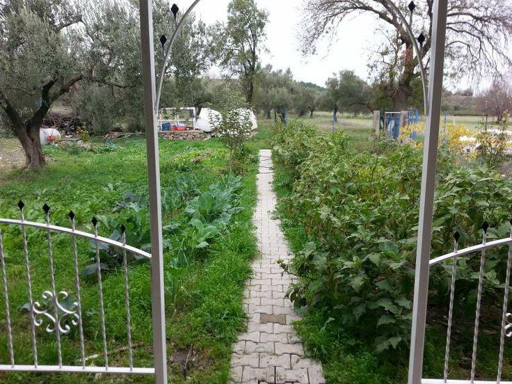 Bahçenin güncel hali Taşevlibahçe - Sayfa 3