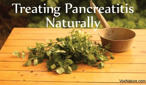 Protecting Your Pancreas: Natural Remedies for Pancreatitis