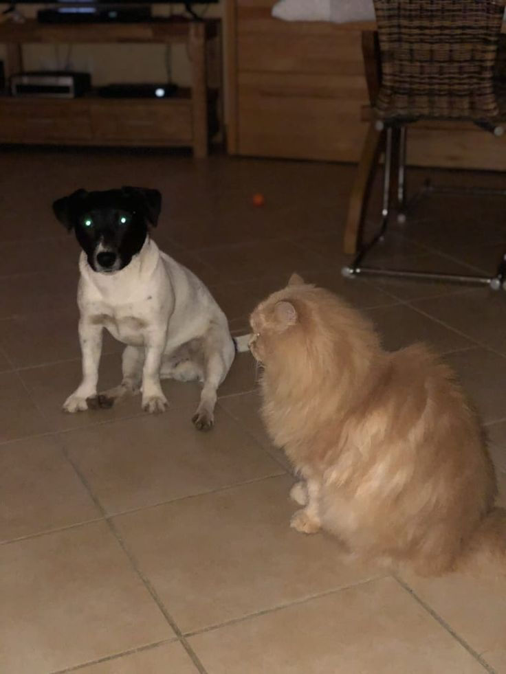 Hunde Foto: Hartmut und Felix - Zwei Freunde.jpeg Hier Dein Bild hochladen: http://ichliebehunde.com/hund-des-tages  #hund #hunde #hundebild #hundebilder #dog #dogs #dogfun  #dogpic #dogpictures