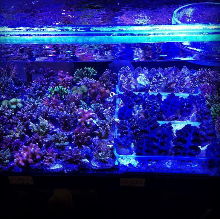 #coral #corals #soft #underwater #crab #garnelen #aquarium #reeftank #reef #saltwateraquarium #tank #invertebrate #germany #nature #instagood #instadaily #reefaddict #fair #messe #fisch #fish #reptile