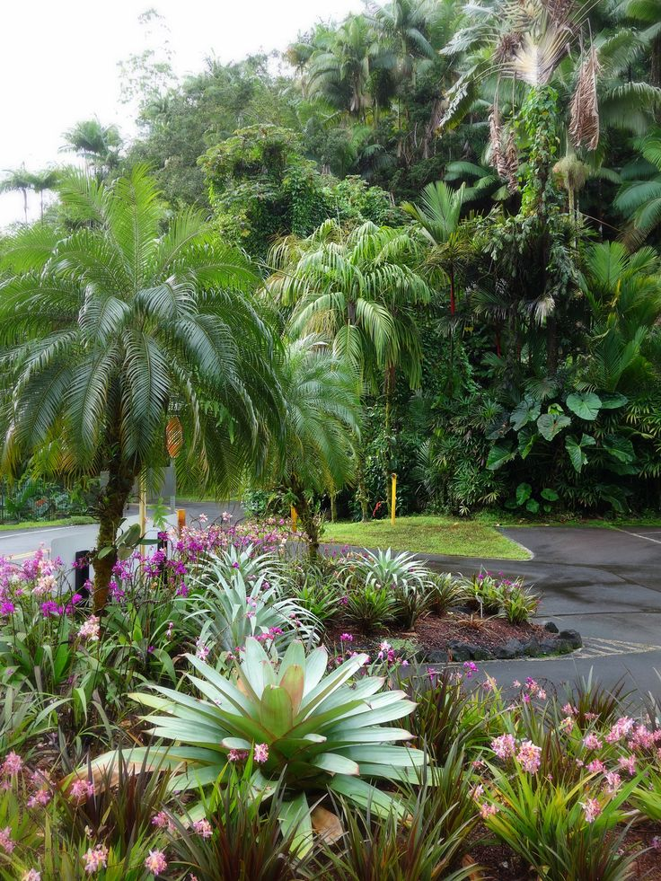 17 best images about tropical yards on pinterest for Garden designs queensland