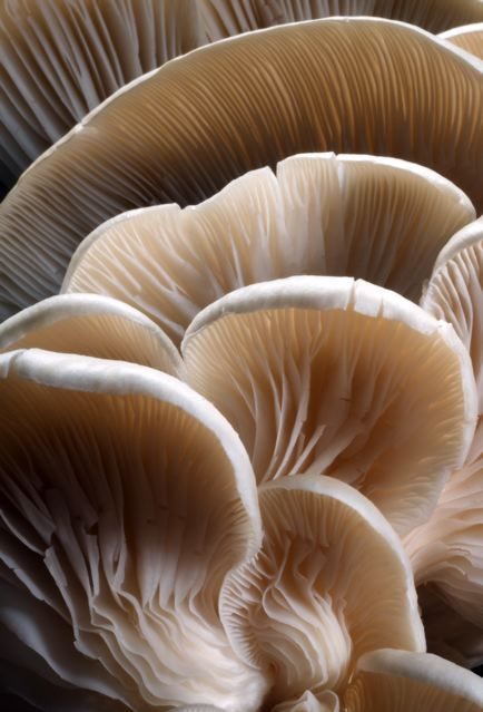 This is a very interesting picture. You can see the details within the mushroom close up.