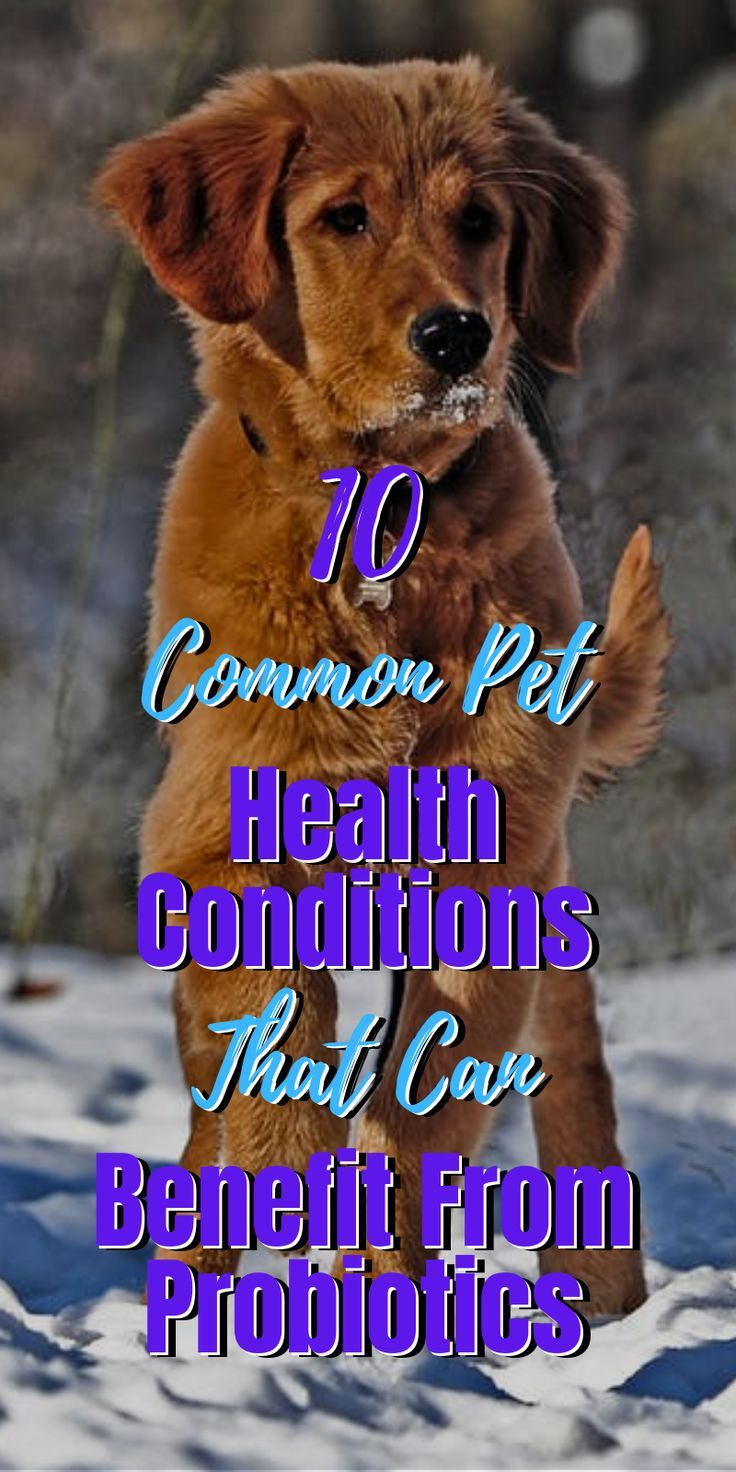 10 Common Pet Health Conditions That Can Benefit From Probiotics