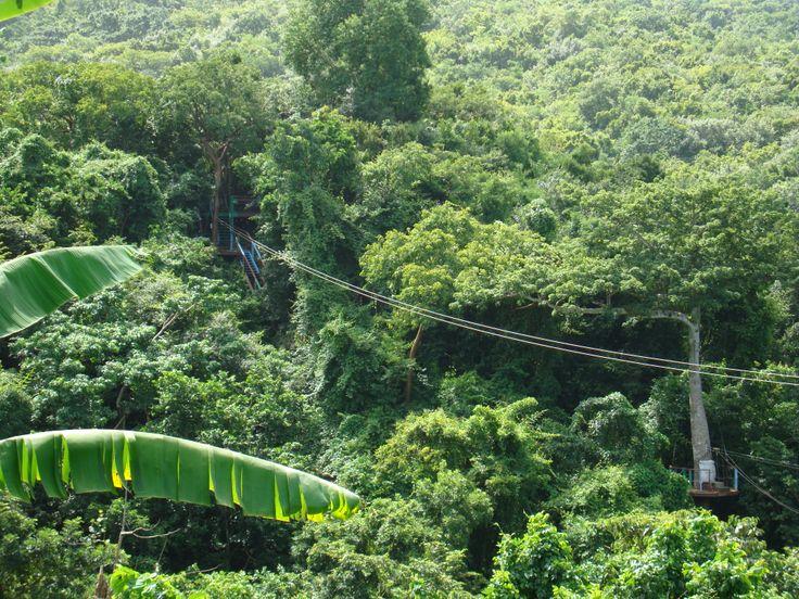 Go Zip-Wiring in the lush Rainforest.