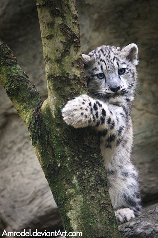 I want to raise a snow leopard and hopefully it won't eat me or anything when it's older. :3<3