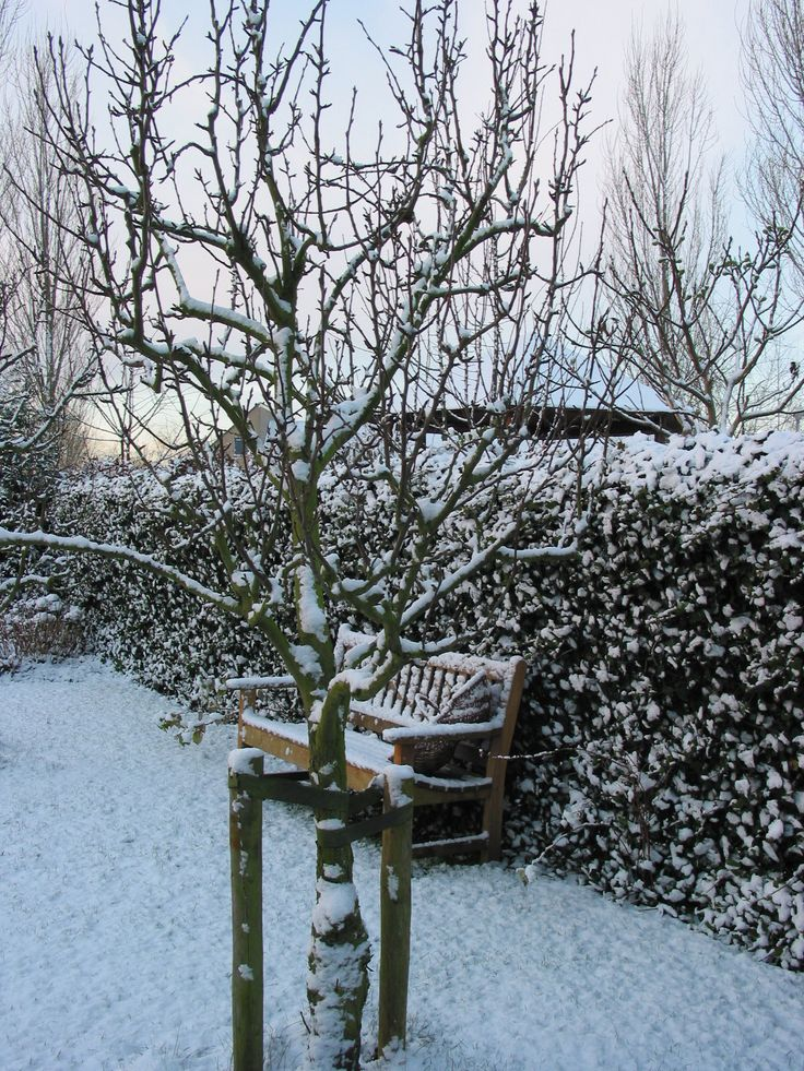 1000 images about wintersfeer in de tuin van raaijen hoveniers on pinterest tuin van and winter - Outdoor tuin decoratie ideeen ...