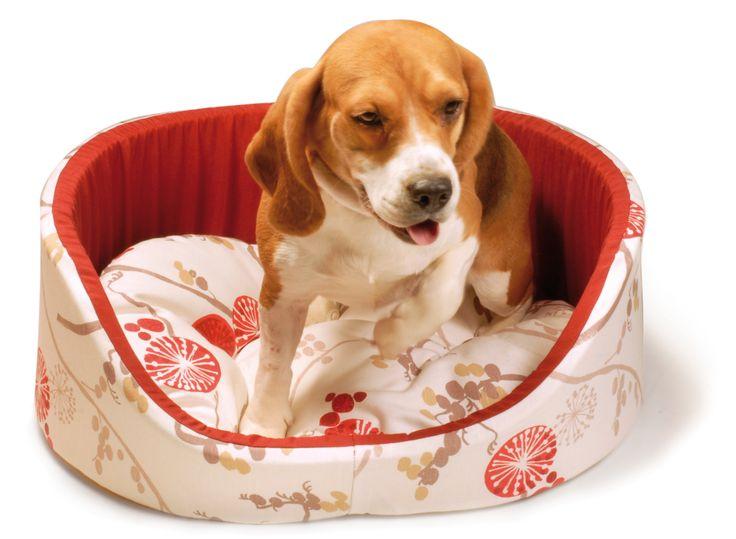 Cuccia per cani Recordit. http://www.recordit.com/