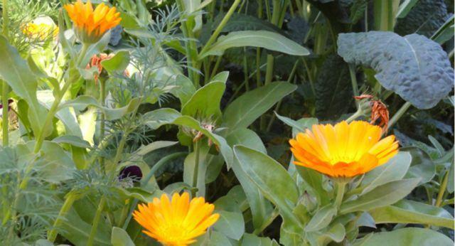 ¿Qué es y cómo hacer un jardín sustentable?