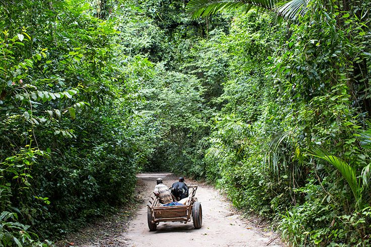 The Ngezi forrest you have to drive through to get to Manta Resort