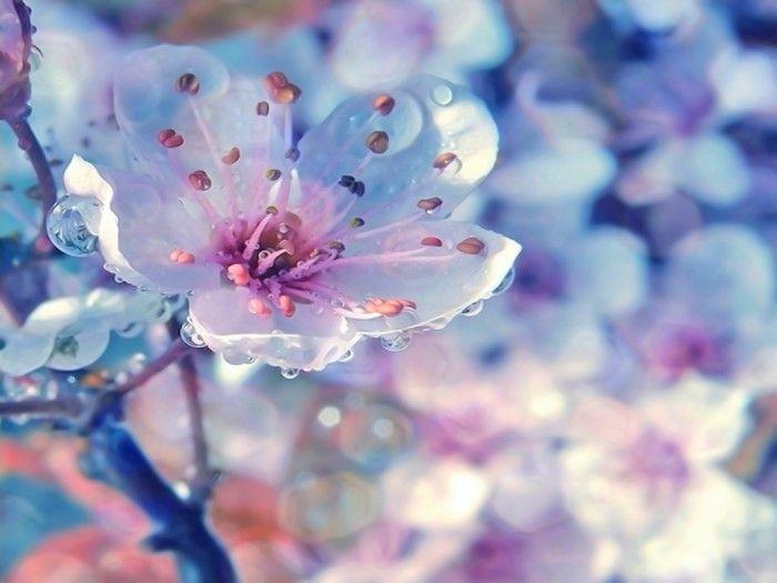 Весна. Галерея фото