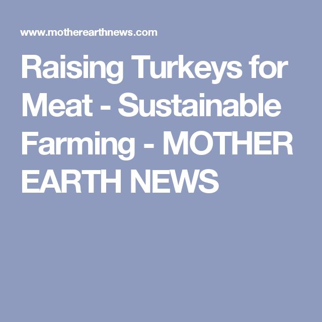 Raising Turkeys for Meat - Sustainable Farming - MOTHER EARTH NEWS