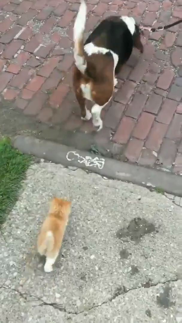 This stray kitten saw some people he liked so he followed them home. – Tiere