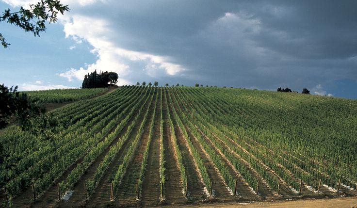 1850 La famiglia Antinori aggiunge alle proprietà di famiglia molte piccole fattorie con vigne nel Chianti Classico, che includono Paterno, Santa Maria, Poggio Niccolini e 47 ettari a Tignanello, che vanno ad estendere la proprietà divenendo l'attuale Tenuta di Tignanello.