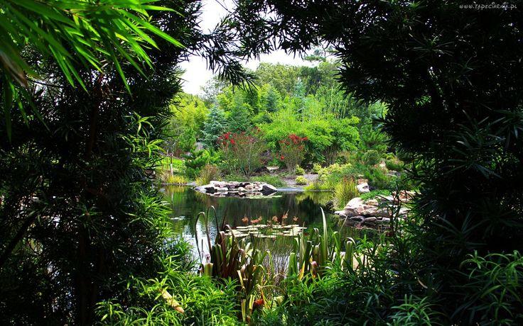 Park, Staw, Rośliny- Piękne tapety na Twój pulpit.