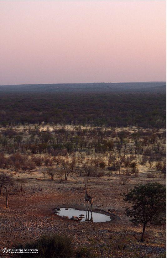 Namibia #travelphotography #nature #africa #landscape #desert #travel #namibia