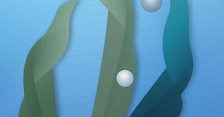 Fertilizante caseiro de algas marinhas