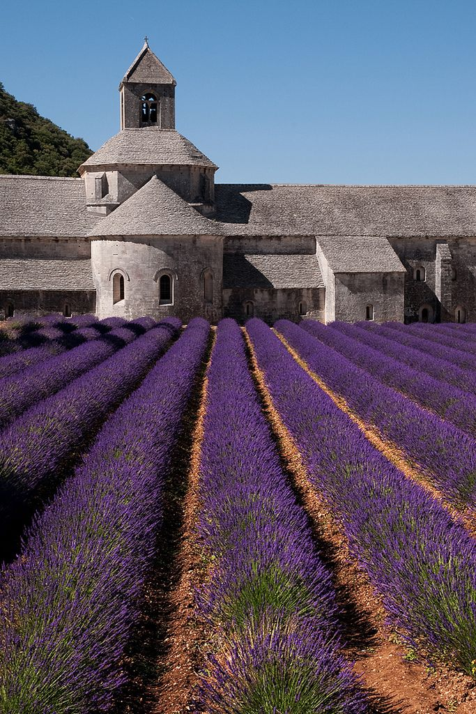 Sénanque Abbey, Gordes | France (by franc/34)  I will smell the fresh lavender fields in France!