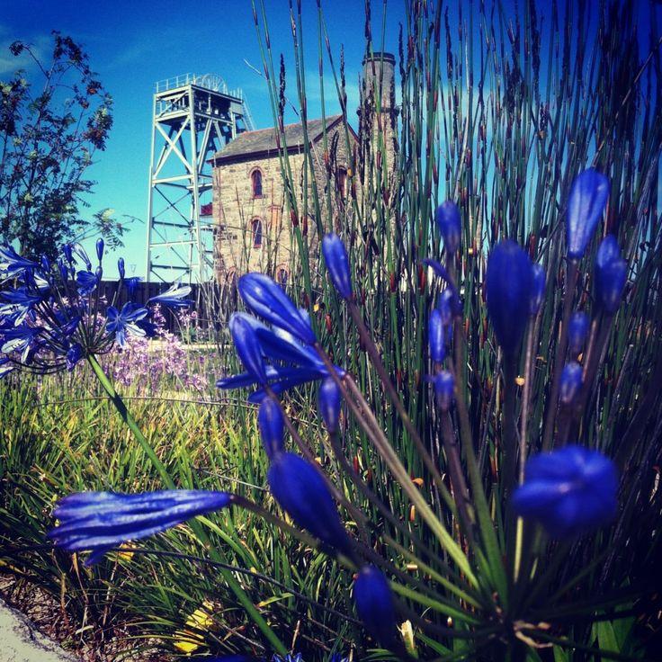 Diaspora Botanical Gardens in Cornwall   Heartlands Cornwall