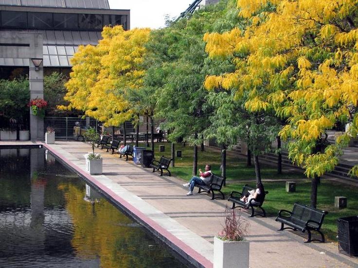 Toronto. Fall colors. Mel Lastman Square