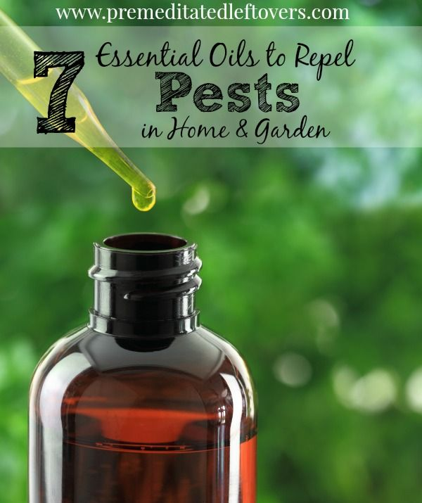 7 Essential Oils to Repel Pests in Your Home and Garden