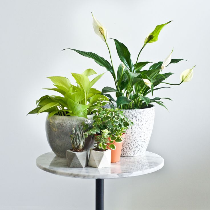 Plant and Marble inspiration featuring Krossi table by Schiavello.