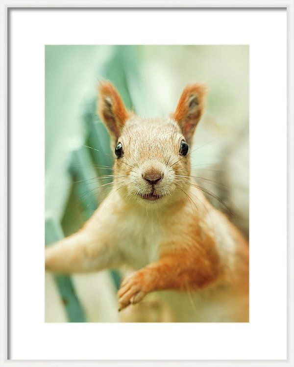 Framed Print featuring the photograph Face Of Cute Squirrel by Oksana Ariskina for children and kids. Cute and funny wild animals! #OksanaAriskina #Squirrel #WildAnimal Available as poster, greeting card, phone case, throw pillow, framed fine art print, metal, acrylic or canvas print with my fine art photography online: www.oksana-ariskina.pixels.com