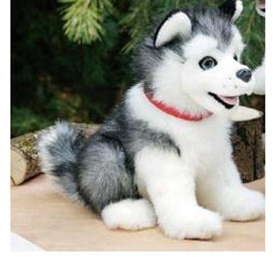 135 Best Huskies I Don T Own Images On Pinterest Gray
