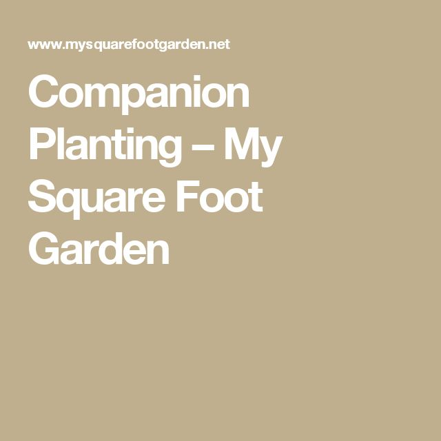 Companion Planting – My Square Foot Garden