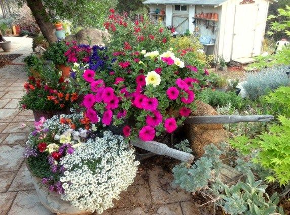 "Sue Langley, ""I can't believe how well these did from lastbyear's petunia plants!"""