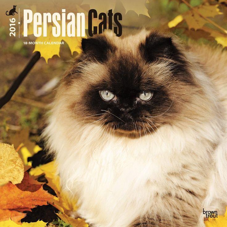 Persian cats calendar 2016