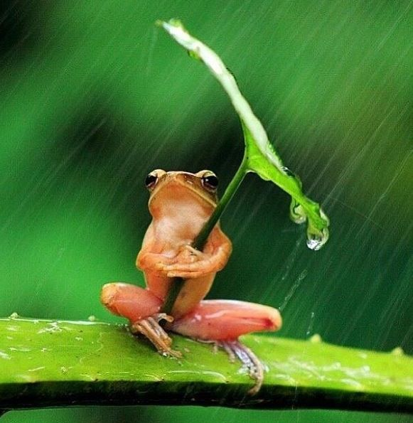 this would make an adorable drawing: Photos, Umbrellas, Trees Frogs, National Geographic, Shelters, East Java, Raindrop, Leaves, Rain Drop