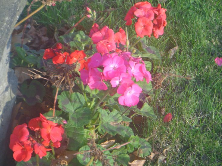 Abercrombie Square Park, Photograph taken of flowers planted in the park.