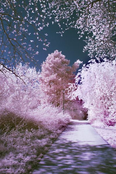 Pink Cotton Candy Trails- Walk in a fantasy world full of pink candy dreams and  grape grass. Pin-board by Asher Socrates. #pink #candy