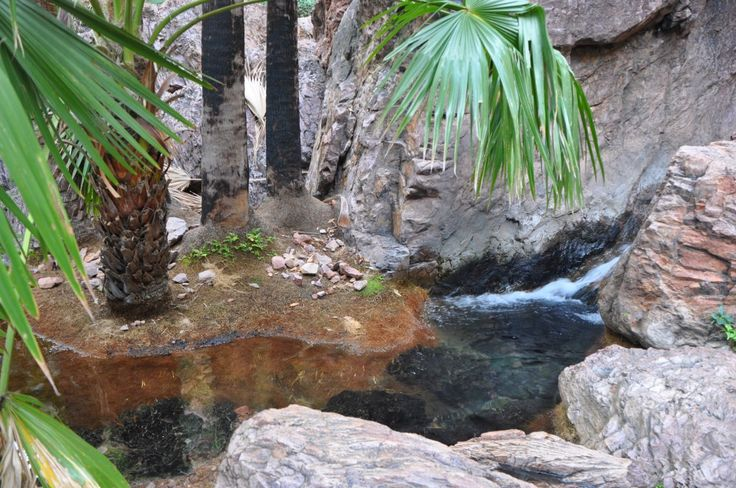 Feel like you are on a million dollar holiday as you laze about in Zebedee Springs at El Questro on the Gibb River Road